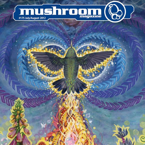 mushroom-2012-07-1